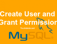 Create MySQL User